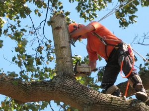 Oxbow Tree Removal