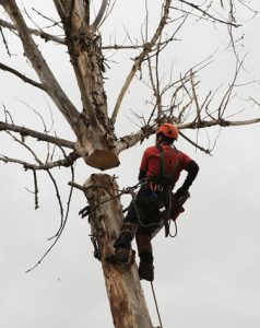 Filer Idaho Tree Trimming
