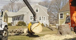 Tree Removal Oxbow