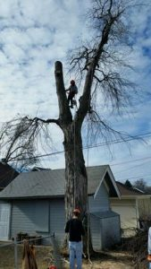 Tree Removal in Oxbow